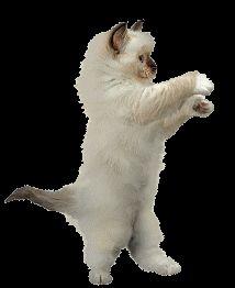 Cats doing gangnam style