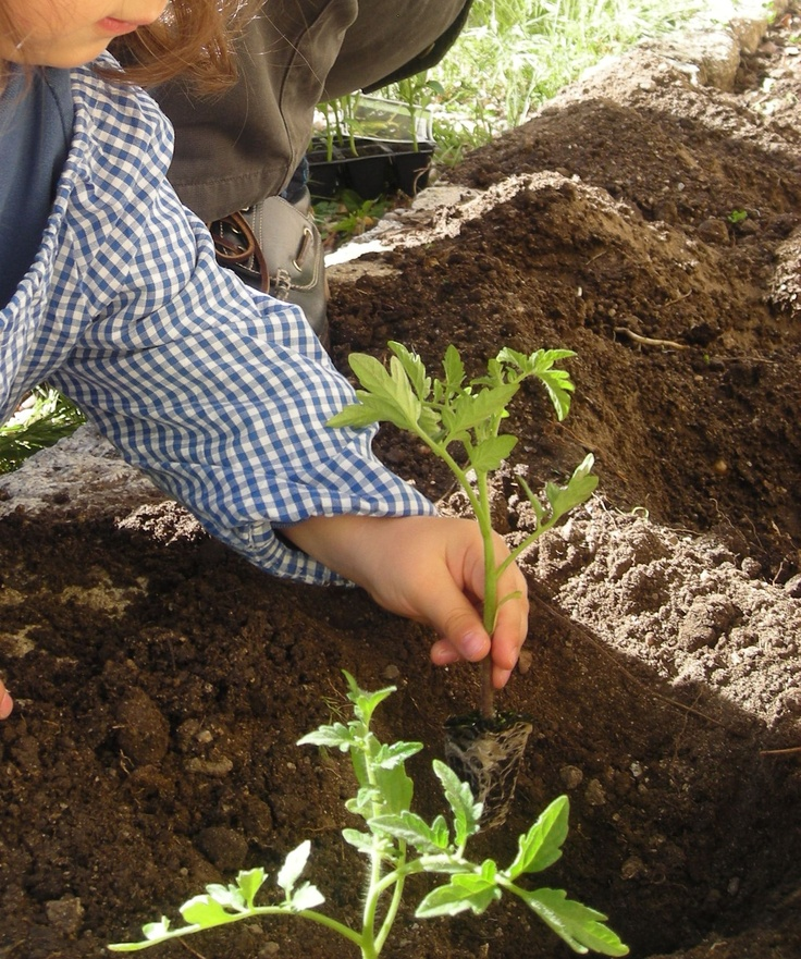 Actividades de huerto y naturaleza en Escuelas Infantiles El Patio
