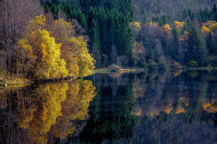 Autumn by the lake. - null