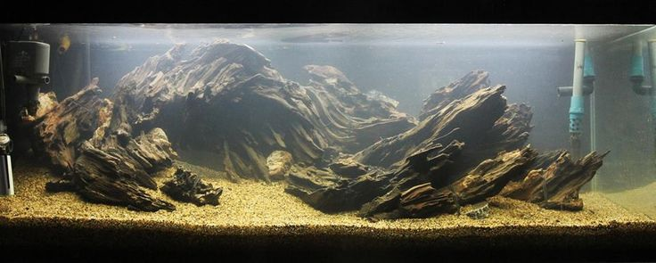 how to prepare driftwood for fish tank