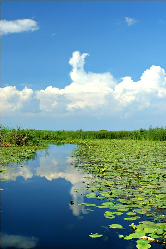 Romania - The Danube Delta - AMP