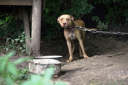 Τι κάνουμε αν γίνουμε μάρτυρες κακοποίησης ή θανάτωσης ζώου