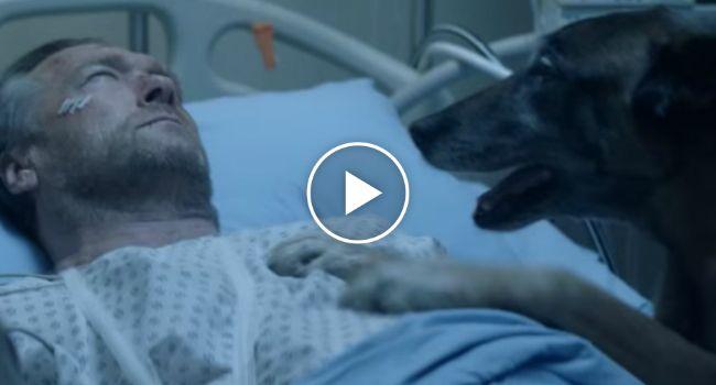 Provavelmente a Melhor Campanha De Sensibilização Para o Não Abandono De Animais