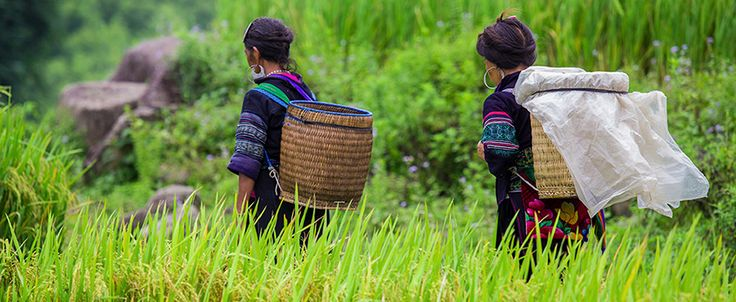 Hmong women in the province of Yen Bai. #vietnam #travel #yenbai #hmong #ethnic #minority #wandering