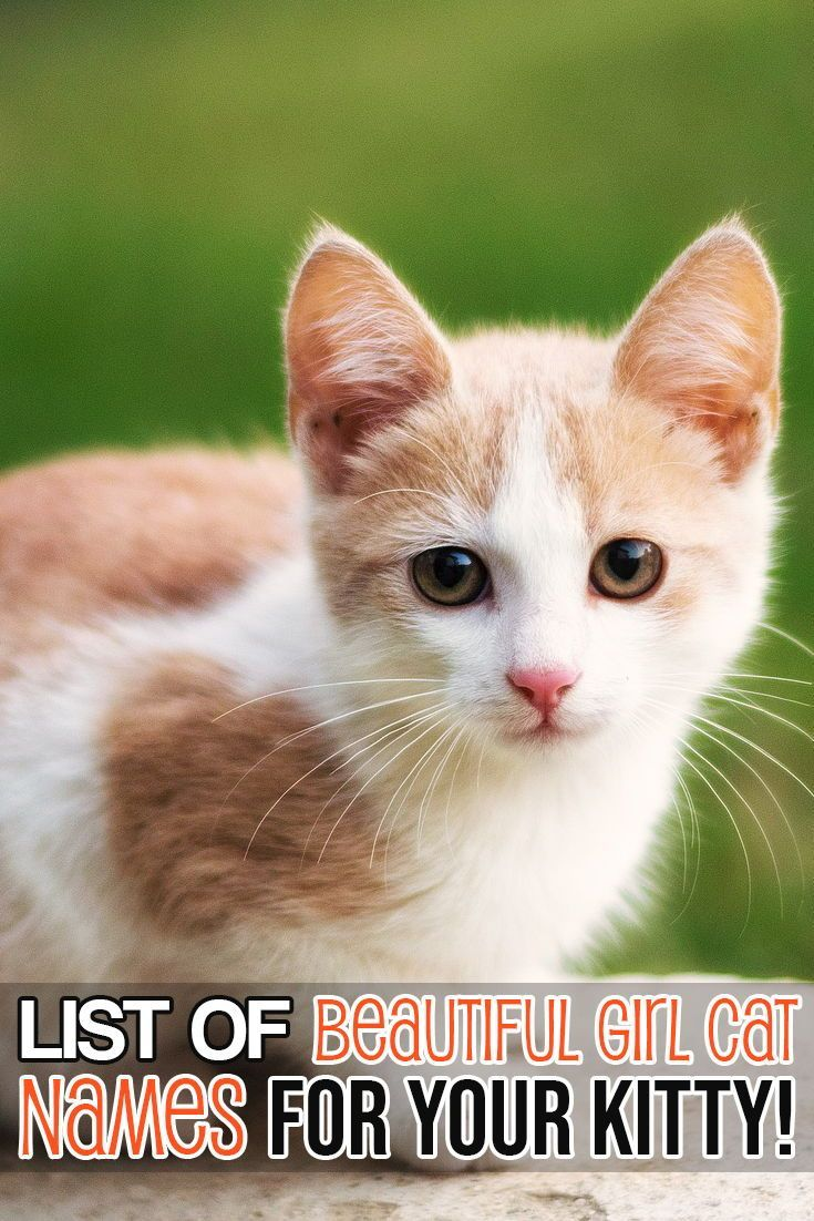 Here Is A List Of The Most Beautiful Girl Cat Names For Your Cat Girl Cat Names Kitten Names Girl Cat Names