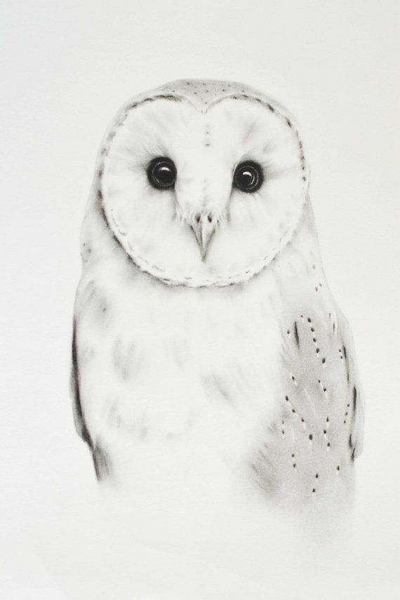 "ORIGINAL Barn Owl Charcoal Drawing - 11""x14"", Barn Owl Art, Owl Drawing, Owl…"