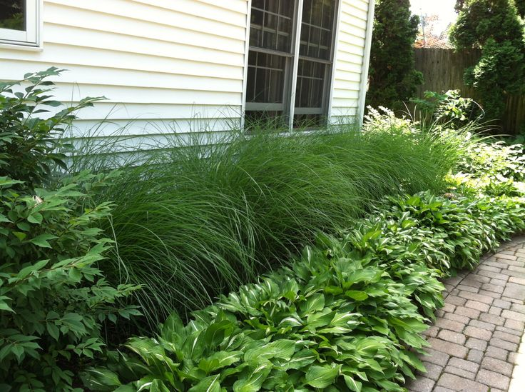 Easy landscaping for the lazy gardener ornamental grass for Grass bushes landscaping