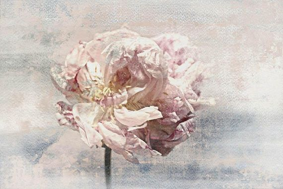 Shabby Chic Floral Canvas Wall Art Peony Canvas Wall Art Floral