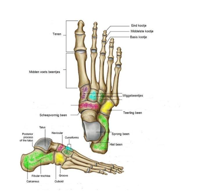 Is de loopstijl of de schoen de oorzaak? - ProRun - Hardlopen, Loopnieuws, Looptechniek