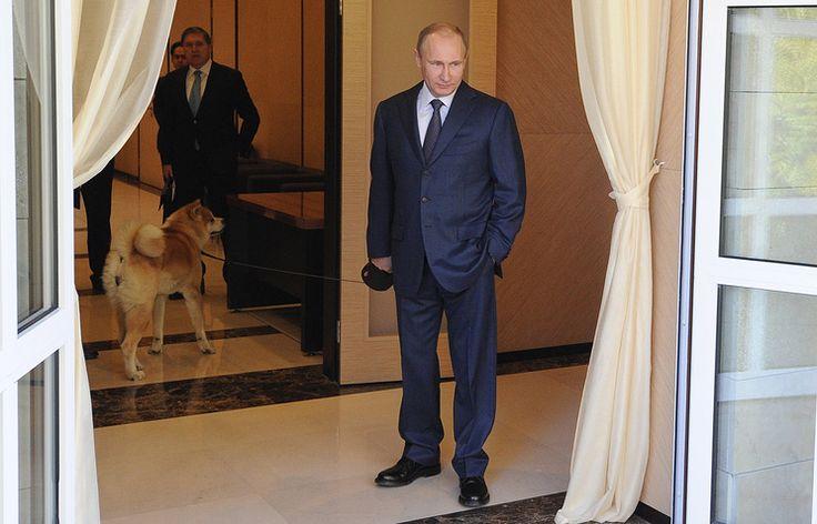 Япония хочет подарить Путину еще одну собаку породы акита-ину   3 декабря, 17:02   http://tass.ru/mezhdunarodnaya-panorama/3838547