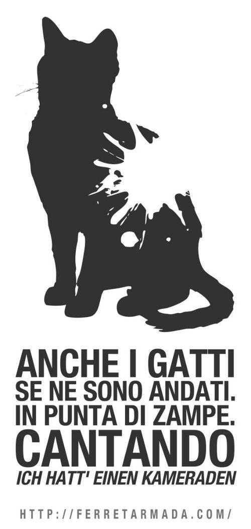 In un appartamento, un gatto. http://ferretarmada.com/in-un-appartamento-un-gatto