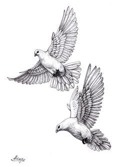 #dove#pigeon#sketch