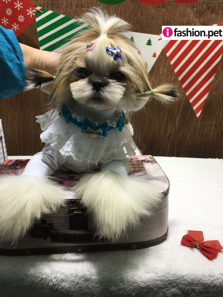 asian style pet collar, pet accessories wholesale, dog,collars,leads, pet collars, dog collar, cat collar, pet supplies, pet collar wholesale, ifashion.pet