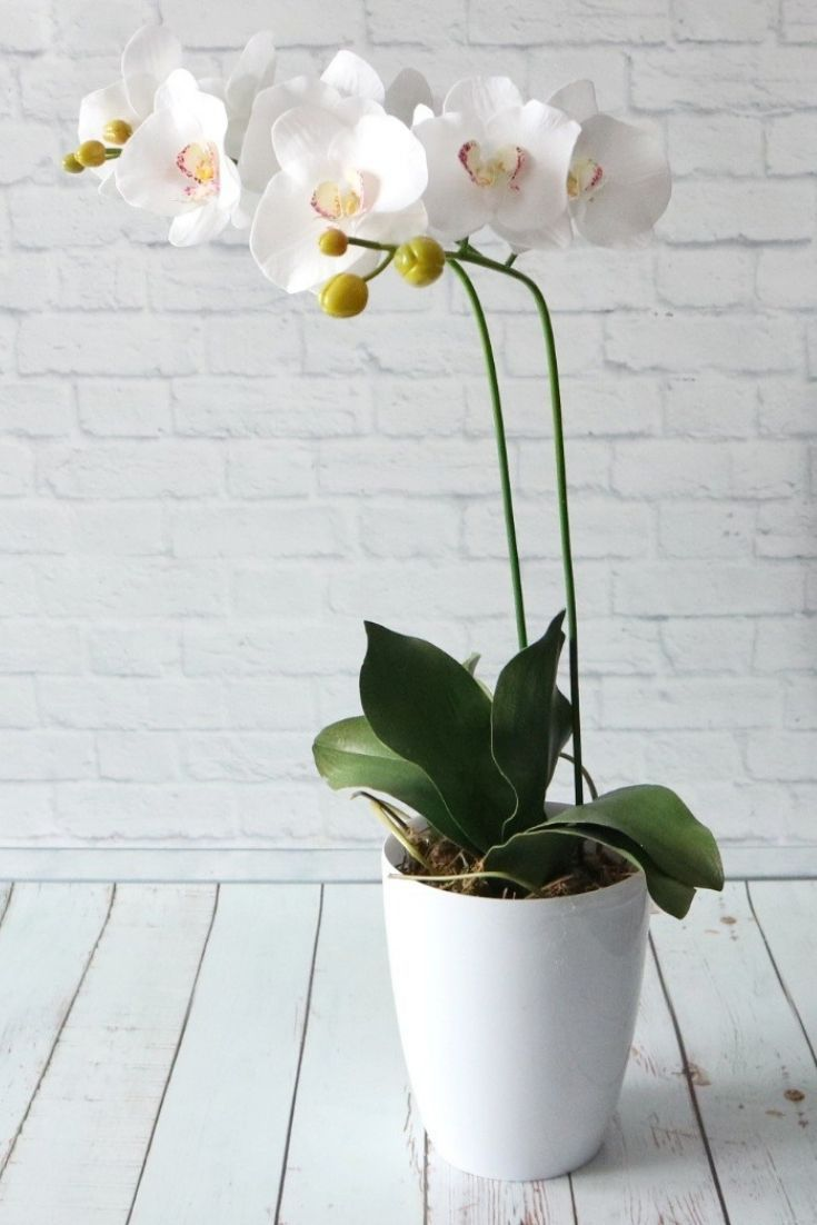 White Real Touch Orchid Flowers Handmade House Potted Plants As Housewarming Or Nature Lover Birthday Gift Orchids Bridesmaid Flowers Forever Flowers
