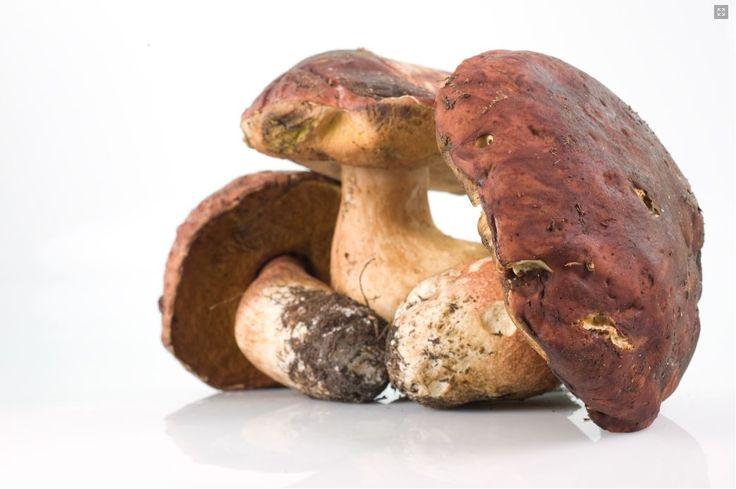 Tuscanative - Porcino mushroom sauce
