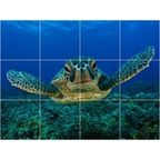Turtle Picture Bathroom Shower Tile Mural 18 x 24 - Contemporary - Tile Murals - by Picture-Tiles