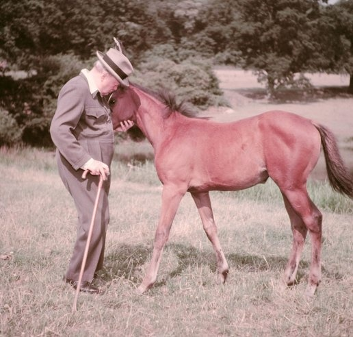 """Winston Churchill and a four-month-old thoroughbred filly (officially unnamed, but called """"Darling"""" by Churchill), Chartwell, Kent, 1950.Filly Official, Call Darling, Except, Four Month Old Thoroughbred, Private Man, Life Magazines, Official Unnam, Sir Winston, Winston Churchill"""