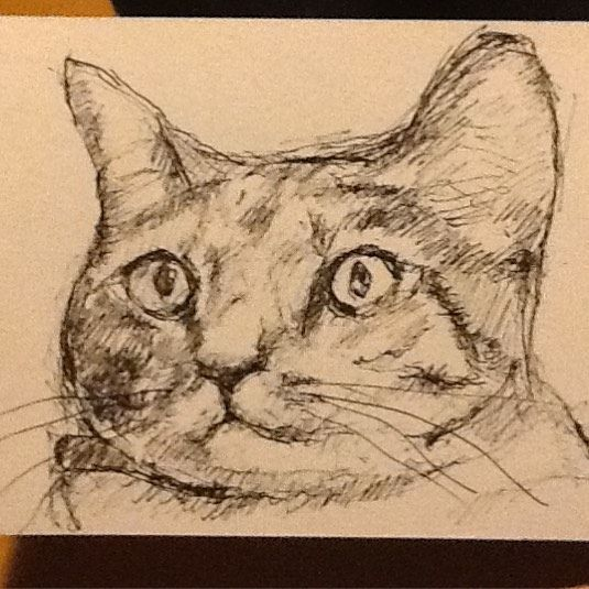 A quick #sketch of a #cat - hope you like it! #tw #catsofinstagram #drawmypet #drawing