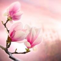 Цветы стр.№2.Арт фото Цветы на холсте, печать фотографий на холсте, купить фото тюльпанов, роз, орхидей, маков в Киеве