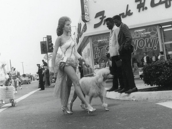 A poodle on 1962 Christmas parade in Inglewood, California.