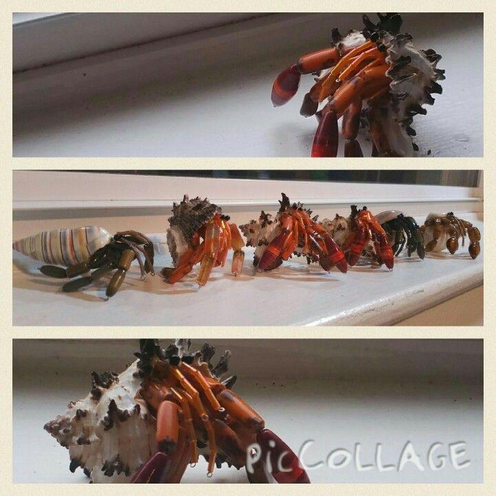 My beaded hermit crabs