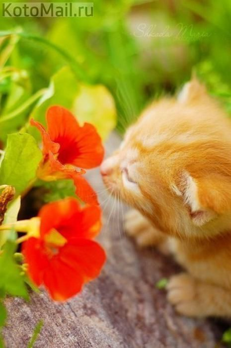 Любимые запахи | Кішка. | Pinterest: pinterest.com/pin/471963235923156982