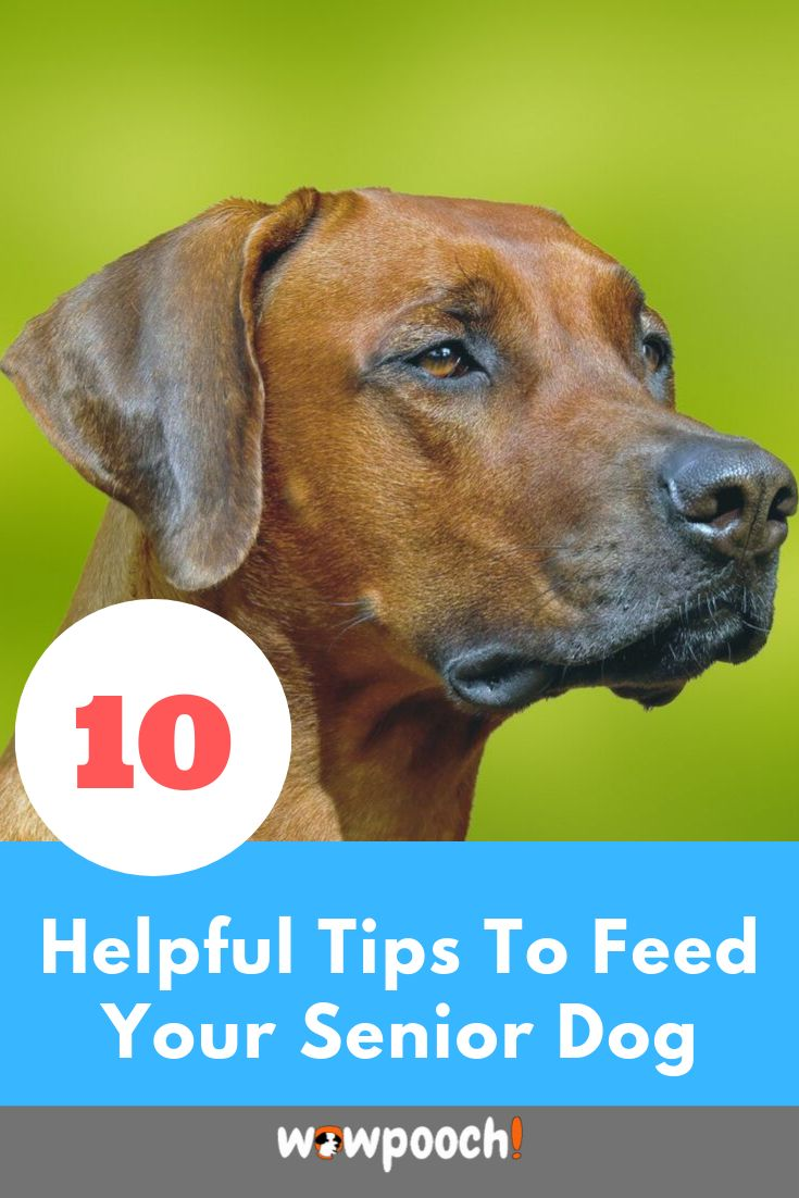 Best wet dry dog foods for older senior dogs best