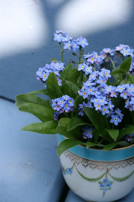 17 Best Images About Forget Me Not Bouquet No Me Olvides On Pinterest Apple Blossoms Spring