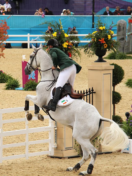 Olympics London 2012 - Show Jumping event. I will do everything in my power to get to the Olympics
