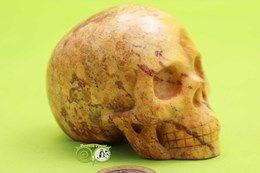 Mooie Fossiel Koraal schedel  Fossiel koraal wordt ook wel (versteend koraal genoemd), geeft levensenergie, en schermt tegen invloeden van buitenaf. Goede steen voor ontwikkeling van het ongeboren kind.  Wordt jij de nieuwe care taker van de...