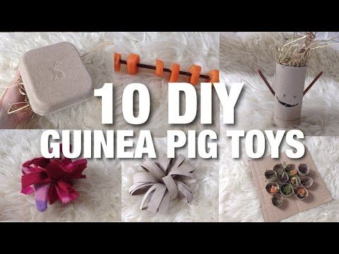 10 DIY GUINEA PIG TOYS! Easy toys for Rabbits and Guinea Pigs