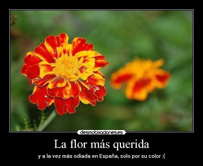 gualda flor - spanish flag color