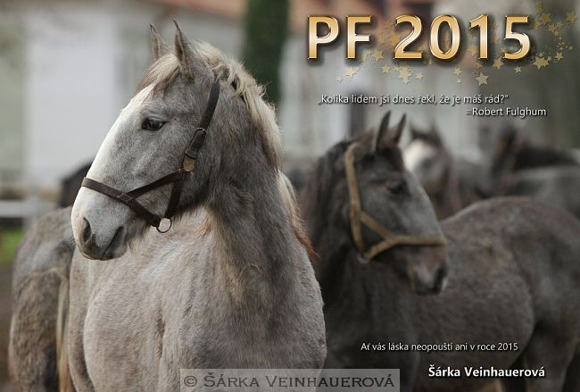Fotky a fotografování koní | Šárka Veinhauerová