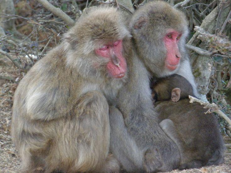Monkey Park in Arashiyama, Kyoto