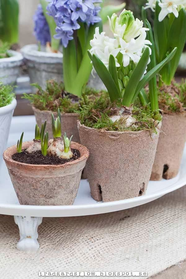 Trädgårdsflow: Spring in the green house