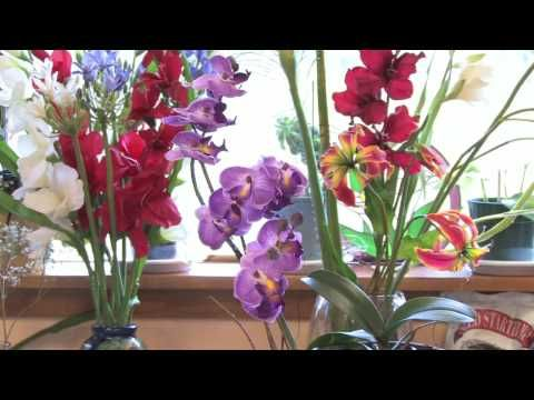 Flowers & Gardens : How to Grow Orchids