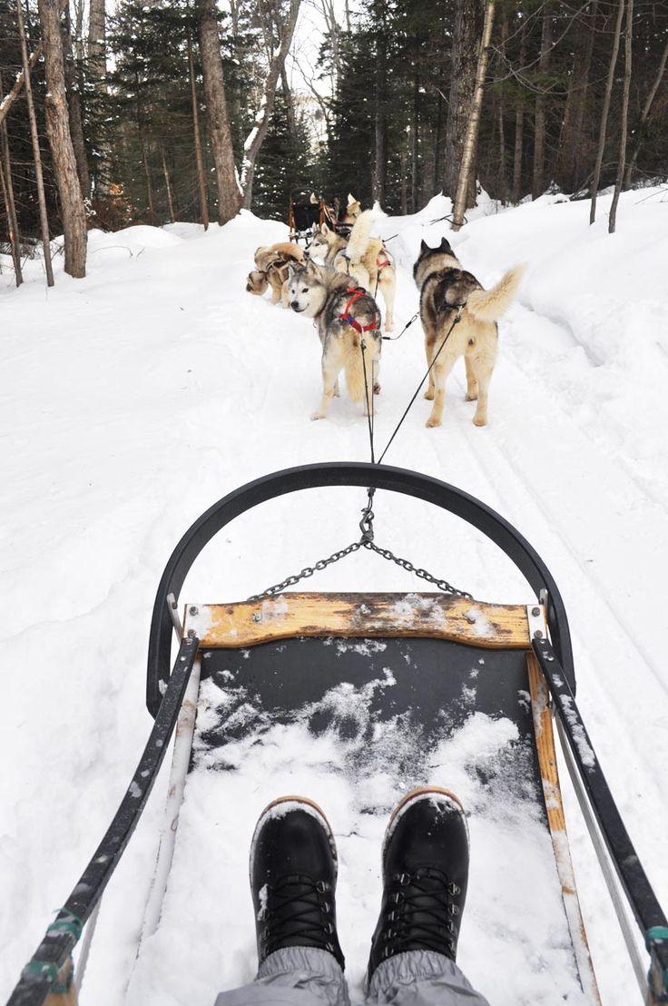 Initiation au traîneau à chiens dans les Laurentides (Québec)