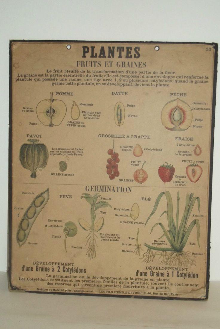 Ancienne Affiche Scolaire Deyrolle Planche Ecole N°10 Sciences Naturelles