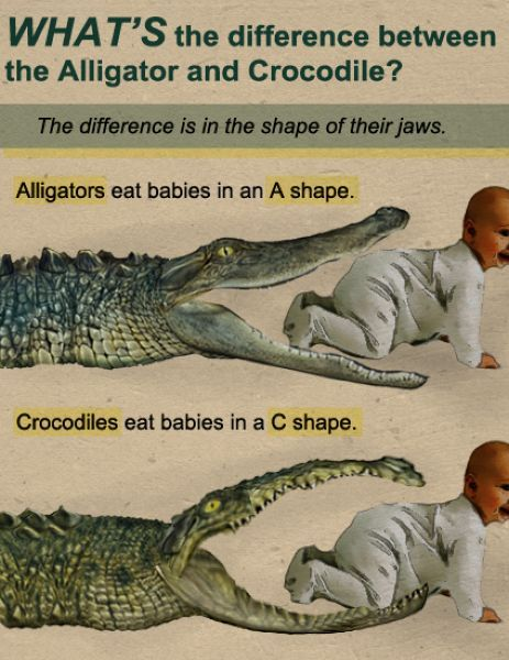 You learn something new every day.: Remember This, Animal Humor, Gators Boys, Animal Facts, Alligators, Science Education, Education Poster, Baby Jokes, Baby Shower