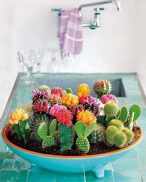 Maceta con composición de cactus de colores