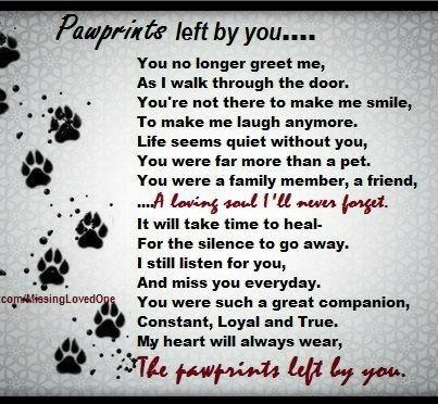 Pawprints left by you...   Tiny Heartbeats   Pinterest