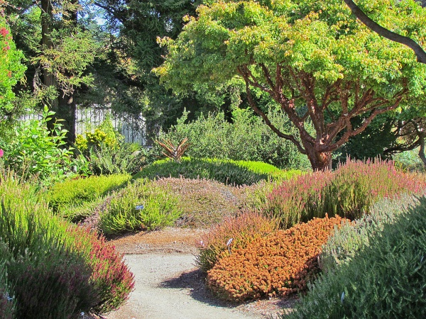 17 best images about beautiful gardens and plant - Mendocino coast botanical gardens ...