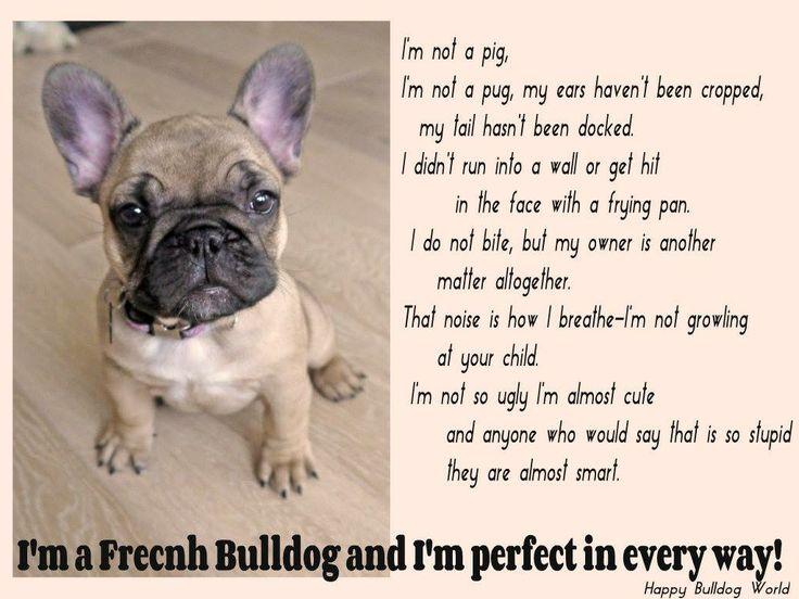 Beautiful Frenchie Poem Everything Bulldogs Pugs