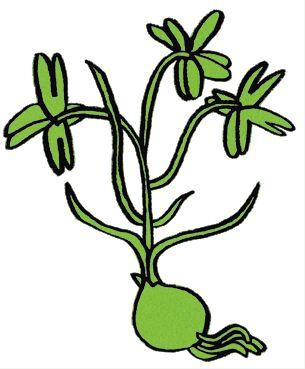Illustration by www.ulrikanilsson.com
