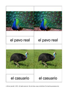 This is a PDF file.It contains eighteen 3 part Montessori cards for birds from around the world. I tried to include quite a bit of diversity.  Included with the name is the corresponding article, to help learn both at the same time.The birds included are:el colibr, la gaviota, el casuario, el pavo real, el guila,el fraolecillo, la grasa real, la cotorra, el pingino, el flamenco, la paloma, el gorrin, el alcatraz patiazul, el bho, el picozapato, el tucn, el avestruz, la gallina,Includes:18…