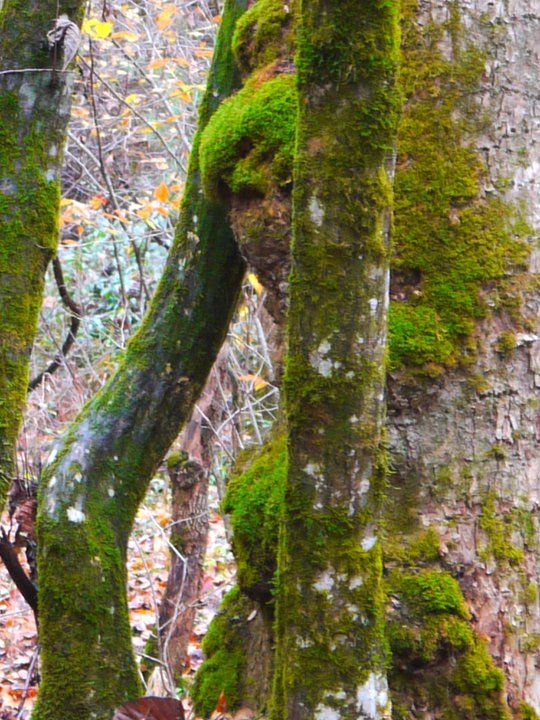 A face in the trees - looking around tree