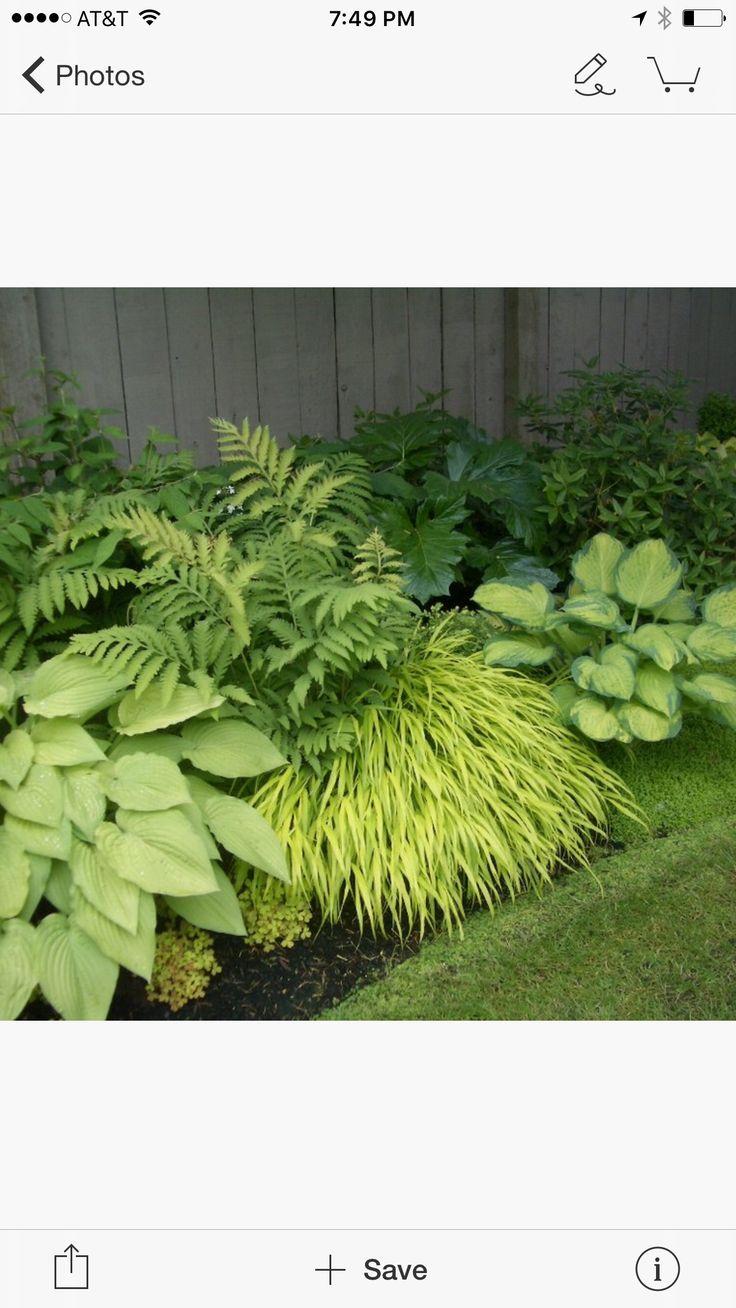 Buy blue dune lyme grass in nw arkansas - 17 Best Images About Japansk Tr Dg Rd On Pinterest Gardens Small Japanese Garden And Ferns