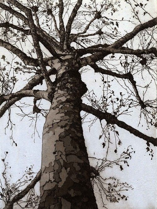 257 Best Images About Etching On Pinterest Trees Dead