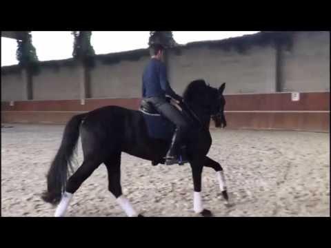 Euro Horse Dressage: Seredipity E.H. by San Remo x De Niro Hanoverian Ma...