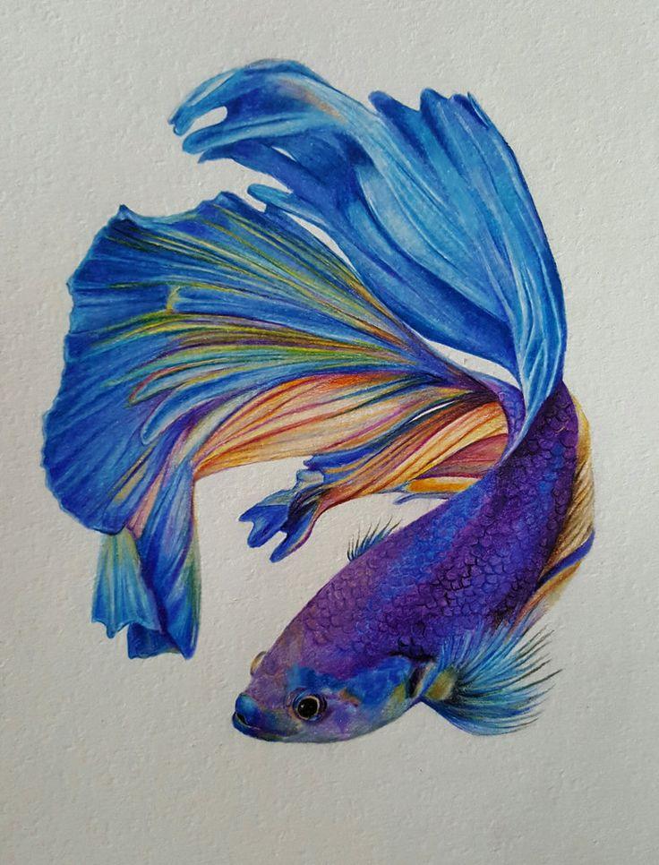 Betta splendens - Pesce combattente by Piccolo-Gufetto